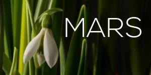 mars-thumb